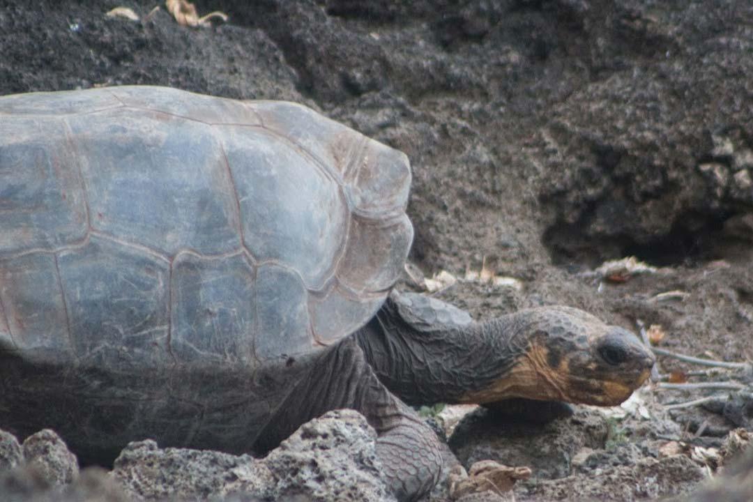 Discover Galapagos